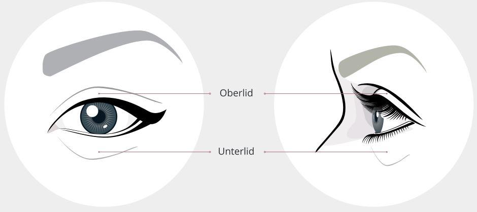 Oberlid & Unterlid Grafik